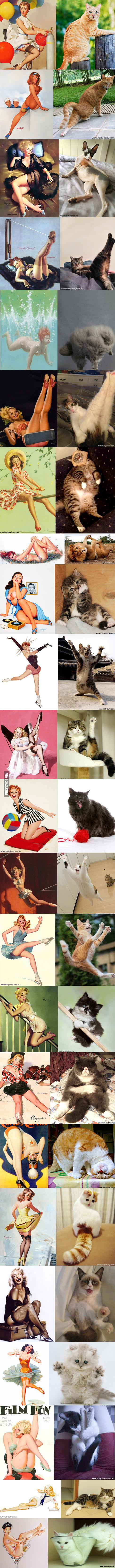 Cats as Pinup Girls