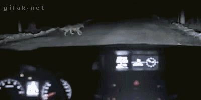 Why you should never stop your car in the middle of the road at night.