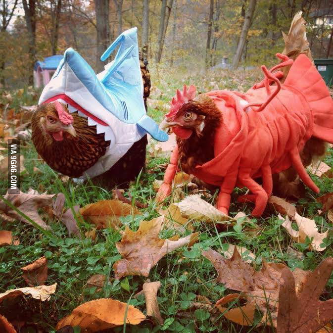My aunt got Halloween costumes for her chickens...