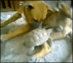 Turtle! Get off my balls!