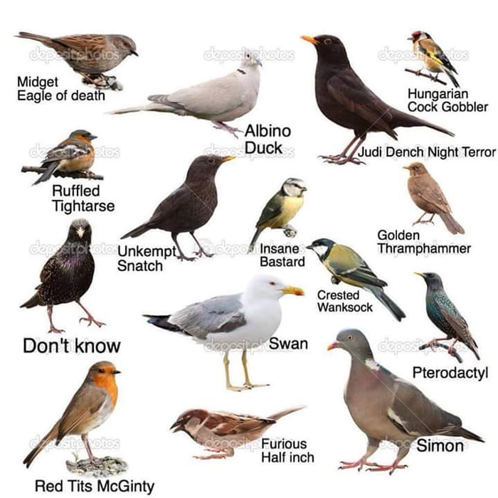 Useless bird identification chart