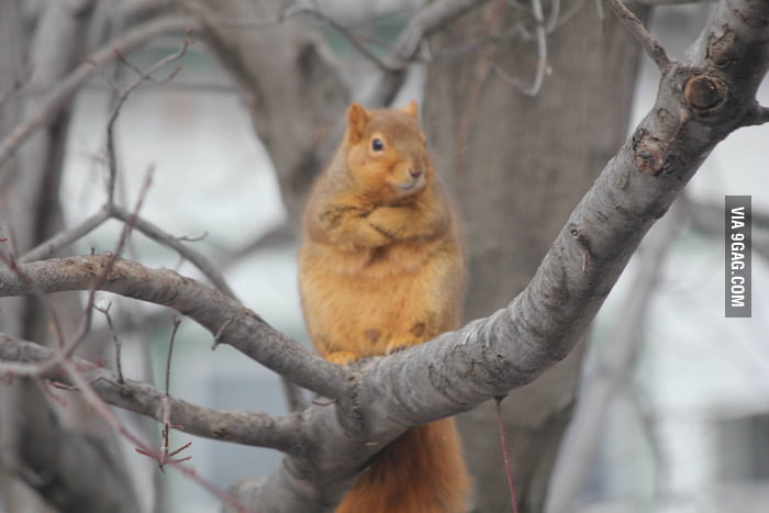 Red Squirrel Disapproves