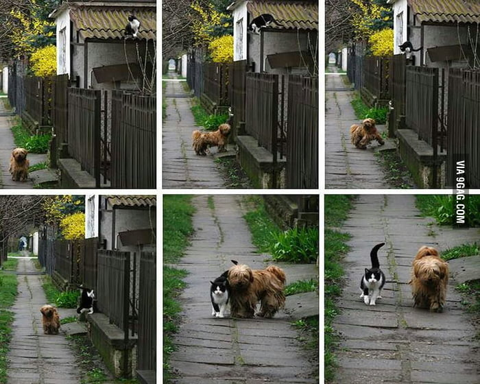 Every morning, she waits for him and they go out to have a walk.