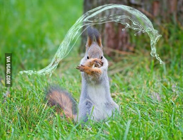 I'm selling a waterbender squirrel, or maybe trading it for a fire/earth bender one.