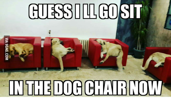 Since the hooman chairs are taken