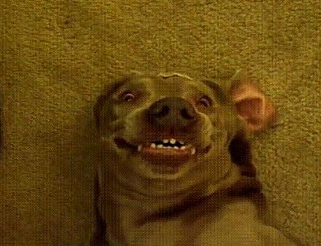 Smiling dog gif