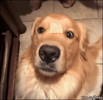 Where'd it go?