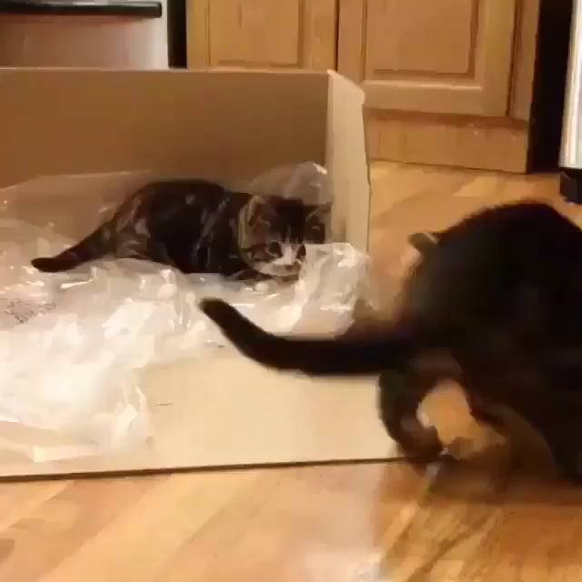 The laziest pounce ever