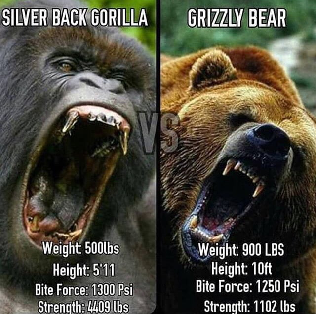 To everyone that thinks a bear will win just because it is heavier