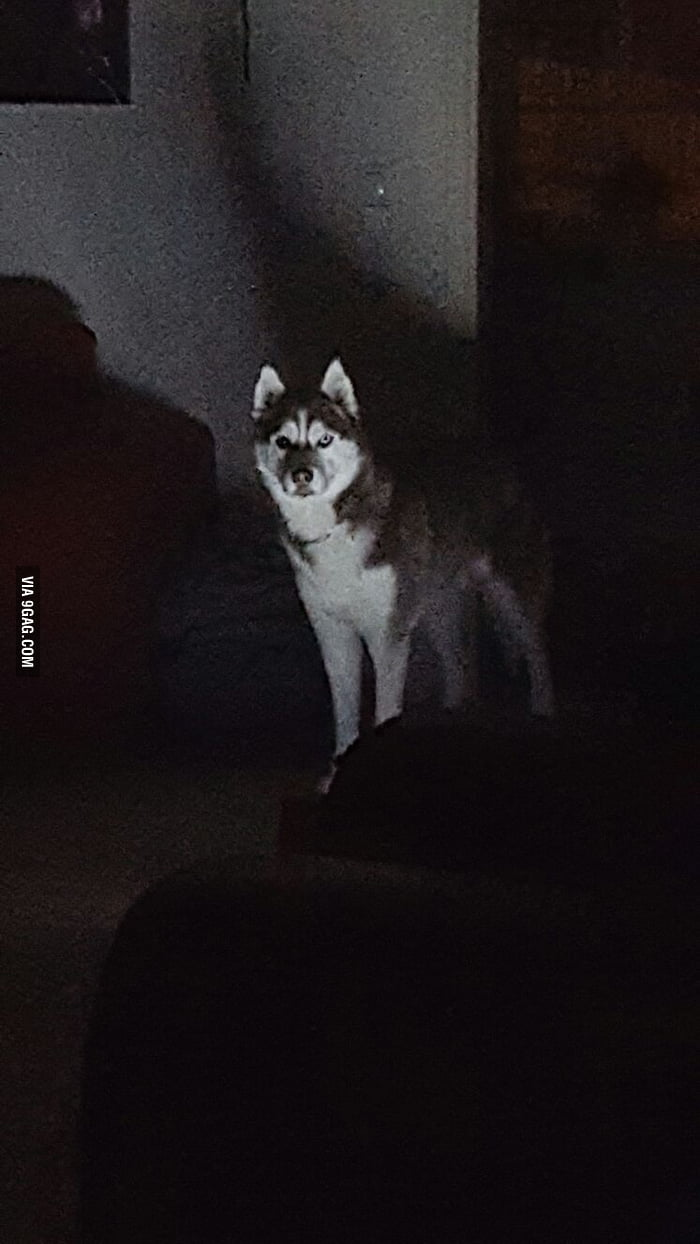 Heard a noise in the living room. I don't own a dog!