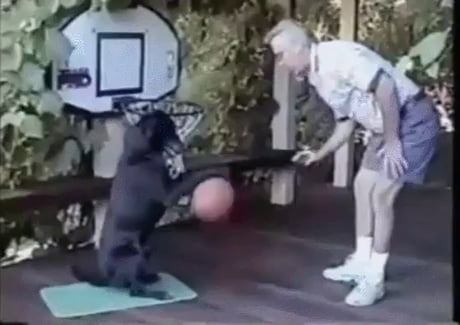Dog playing basketball