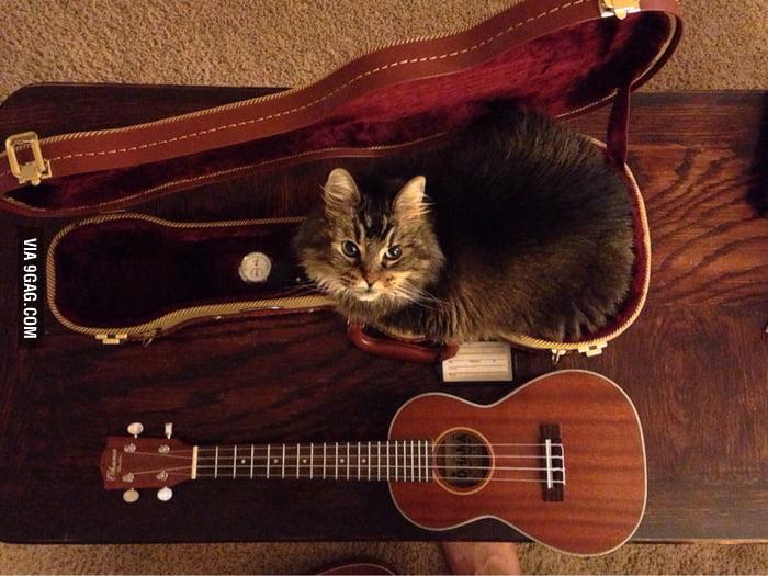 Ukulele Kitten