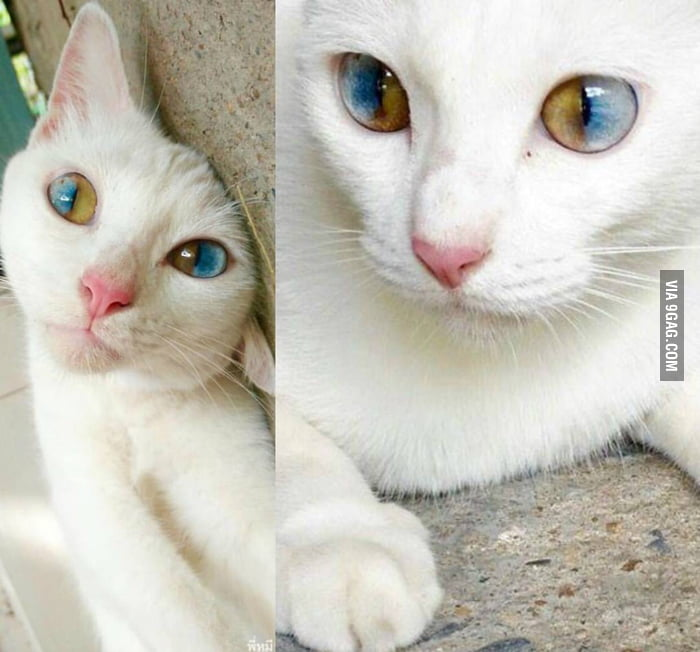 Did someone say they liked heterochromia?
