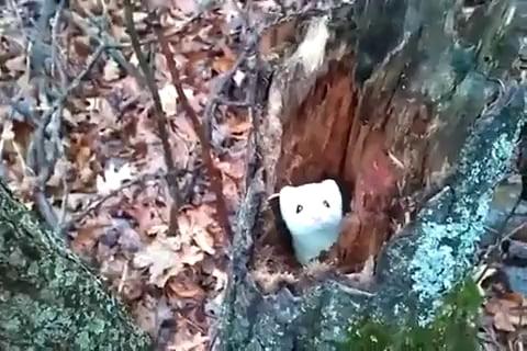 Cute weasel is camera shy
