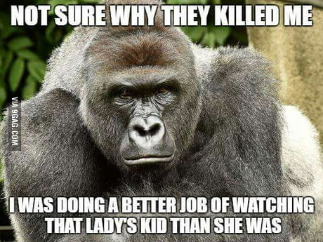 People doing something ignorant? You don't say. RIP Harambe, he just had his 17th birthday :(