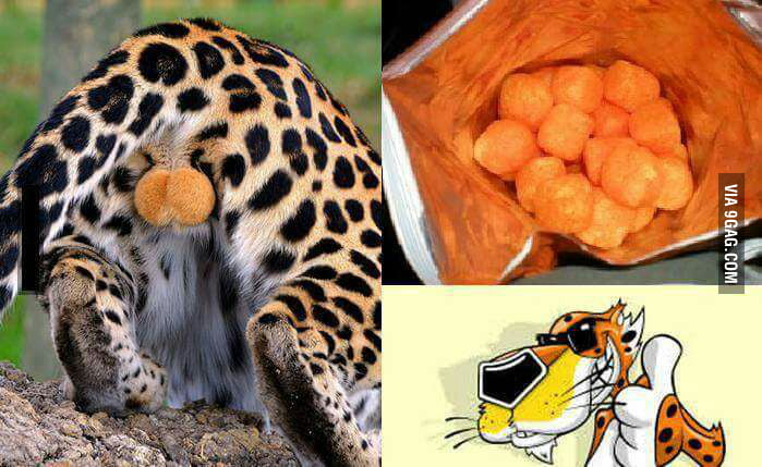 So now you know what cheetos are!