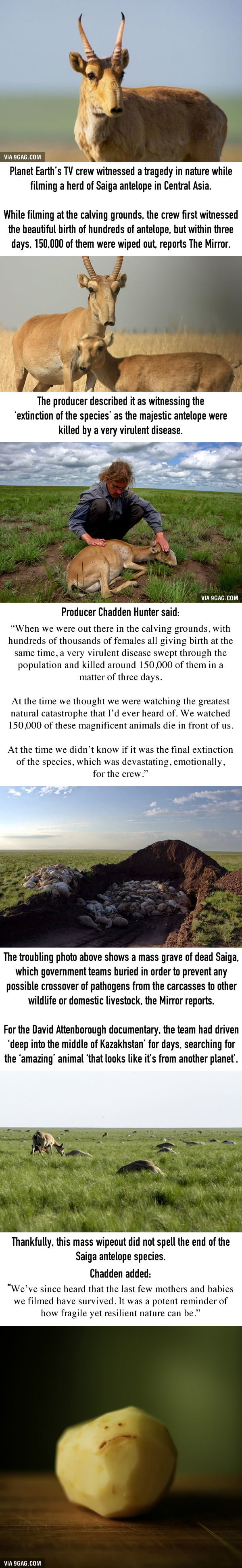 Planet Earth II Crew Horrified To See 150,000 Antelopes Die In Front Of Them