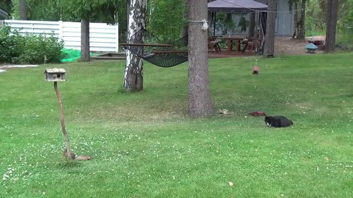 Chubby Cat Vs Squirrel