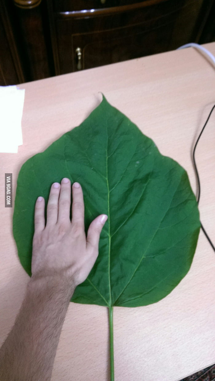 Yesterday found this one, hand for scale