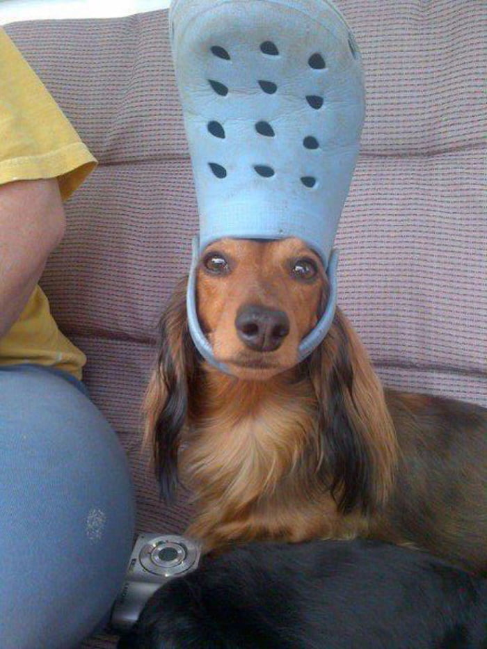 In case you had a bad day, here's a dog with a croc on his head