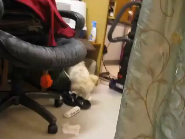 Puppy busted tearing up paper