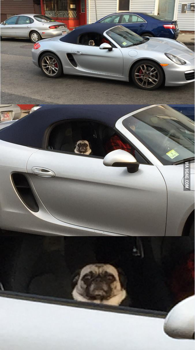 Pug riding shotgun in a Porche, judging the f**k out of me...