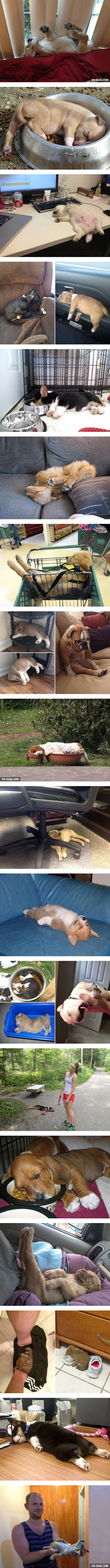 Proof That Dogs Can Sleep Anywhere