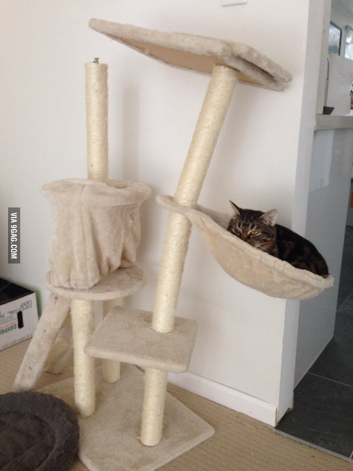 Kitty's too heavy for his kitty tower