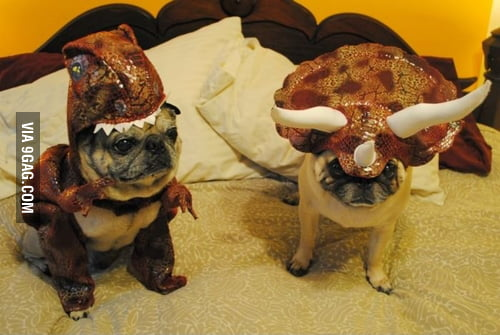 Welcome, to Jurassic Pug!