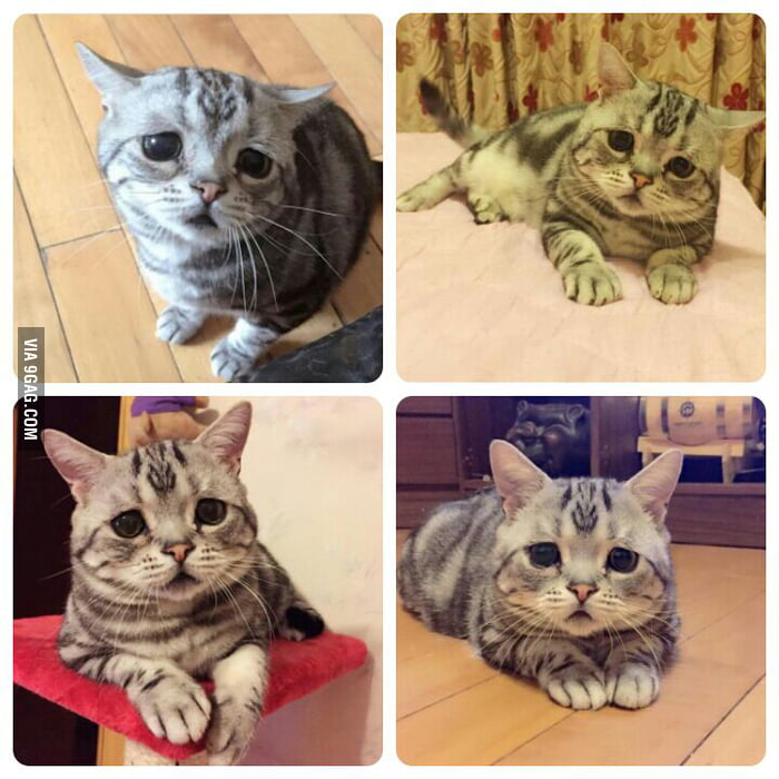 The saddest cat I've ever seen... sad all the time