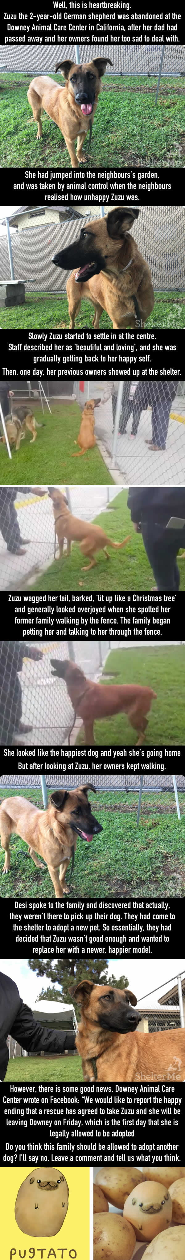 A Dog Who Was Left At A Shelter Later Saw Her Family Come For A New Dog