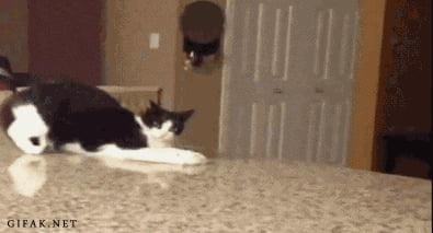 ERROR - CAT.EXE CORRUPTED