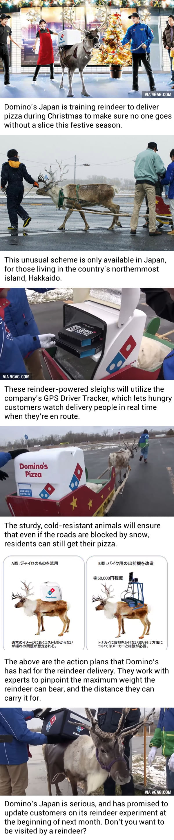 Domino's Japan Is Training Reindeer To Deliver Holiday Pizza. Like, For Real