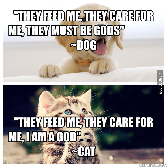 The difference between cats and dogs!