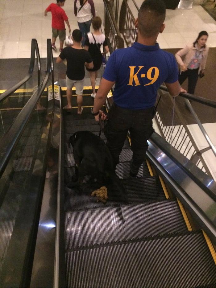 K-9 doggo drops a bomb without handler noticing at an escalator