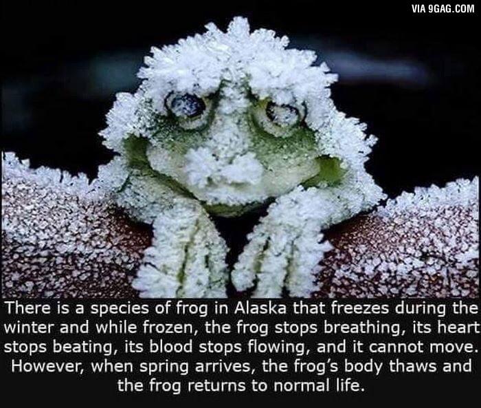 The wonders of science ...