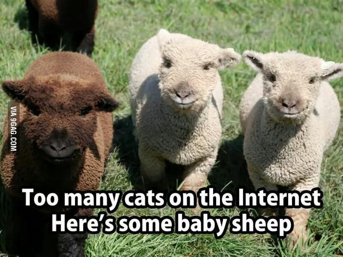 Here some sheep.