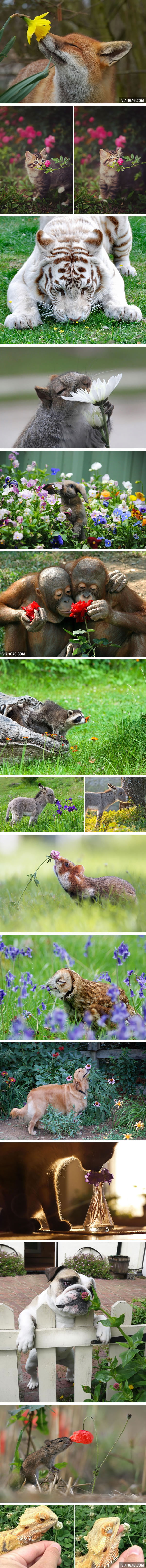 Animals Sniffing Flowers Is The Cutest Thing Ever