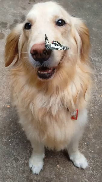 Good boy & his butterfly, so gentle.