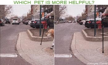 Gato x cachorro! (Cat vs dog)