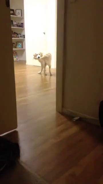 Dog catches tail...