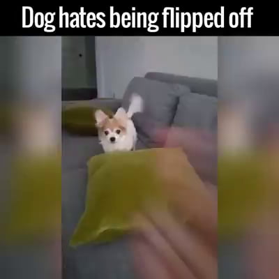 This dog is sick of its owner shit