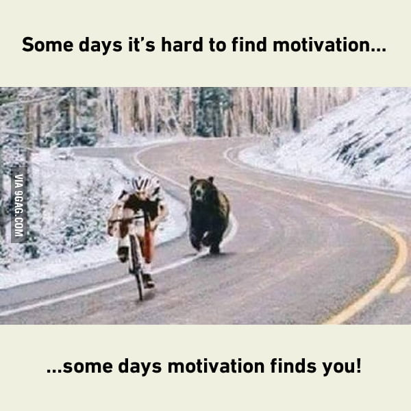 Motivation with bear