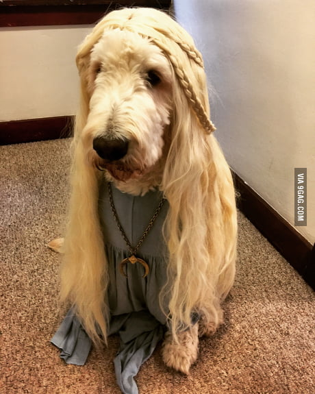 Rocco Targaryen, first of his name