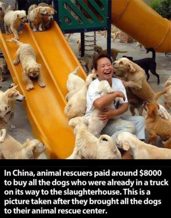 Dogs, the heroes we need but not the heroes we deserve