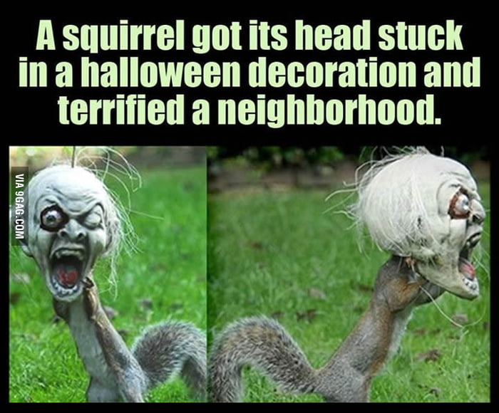 Cosplaying squirrel. It's almost Halloween