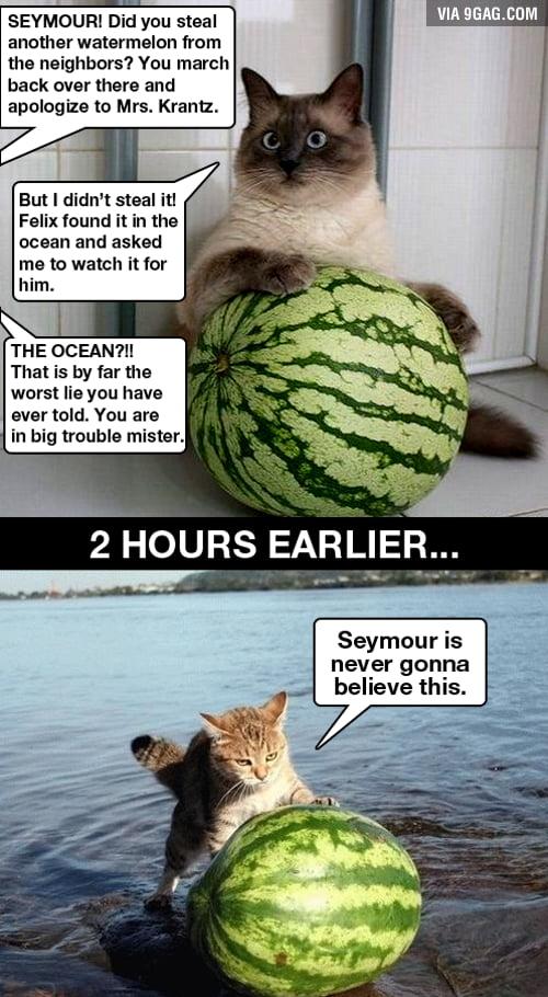 Seymour is a good cat, Seymour never tell lies.