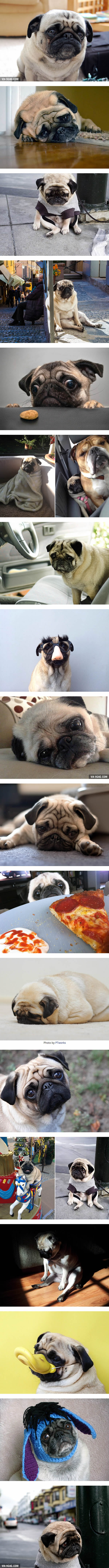 These Extremely Sad Pugs Will Make Your Heart Melt