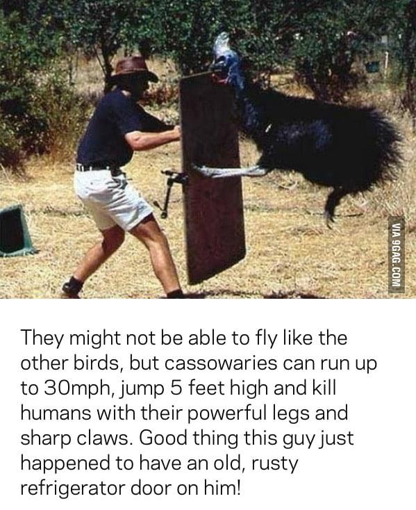 Australia: even the birds can kill you.