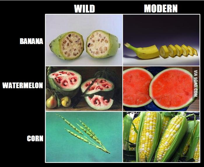 Razlika med divjo in 'udomačeno' zelenjavo/sadjem